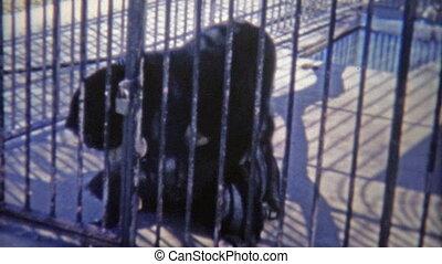 1973: Black Bears wrestling looking
