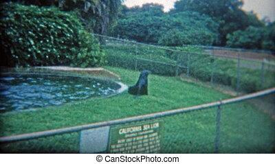 1973: Small sea lion habitat with