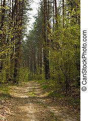 1a, יער