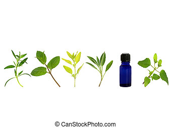 Herb leaf sprigs of hyssop, chocolate mint, golden marjoram, sage, and bergamot and an essential oil blue glass bottle, over white background.