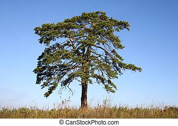 1.tree