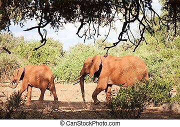 2匹のエレファンタ, 歩くこと, サファリの上に, 中に, ∥, 景色, の, kenya