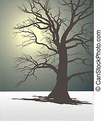 2, árbol, niebla, invierno