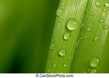 2, лист, дождь, drops