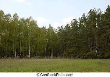 2, יער