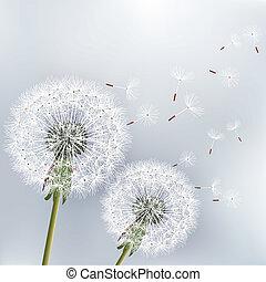 2, たんぽぽ, 背景, 花, 流行, 花