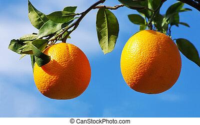 2, オレンジ, 上に, 木