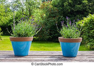 2, カラフルである, 青い花, ポット, 上に, a, 庭テーブル, 中に, a, 緑, 庭