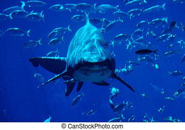 #2, サメ, 斑点を付けること
