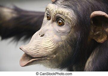 2, チンパンジー