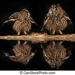 2, フクロウ, 上に, a, 木