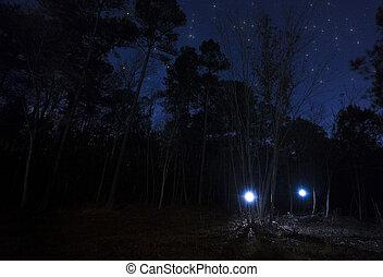 2, ヘッドライト, 中に, ∥, 森林, 夜で