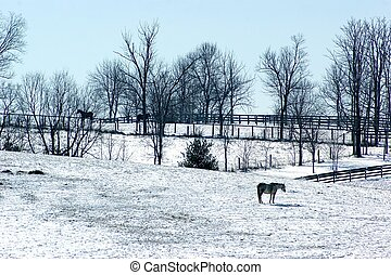 2 月, 雪, 上に, ky, 馬, 農場