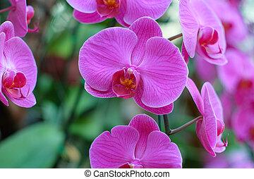 2, ausstellung, zweig, orchideen