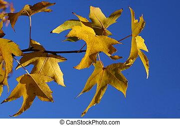 #2, autunno