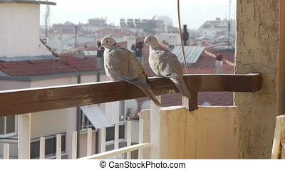 2 birds on balcony.
