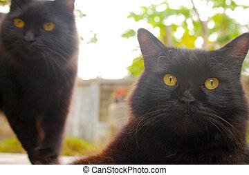 2 Black Cat