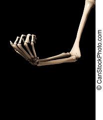 2, braccio, osso, mano