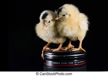 2 chicken