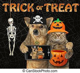 2, chien, chat, halloween, étreint