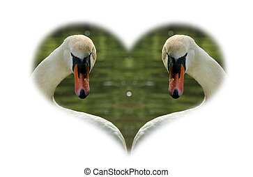 2, cisnes