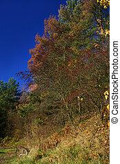 #2, couleurs, automne