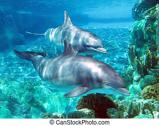 Dolphins - 2 Dolphins