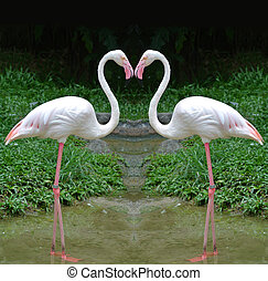 2 Flamingo in heart shape