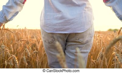 2 in 1 video. Female hand touching wheat on the field in a sunset light