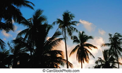 2 in 1 video. Tropical sunset sky with palm trees