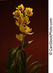 2, jaune, orchidée