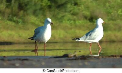2 madár