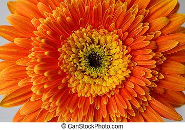 2, margarita de flor