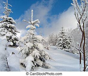 (2), nieve, brillante