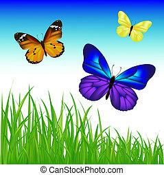 2, papillons, herbe, ensemble, vert