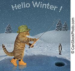 2, pesca, ghiaccio, gatto