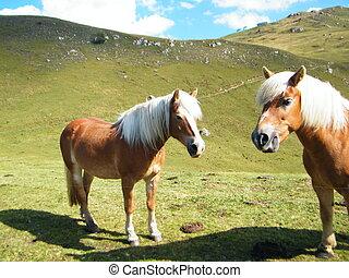 2, pferden