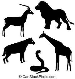 2, silhuetter, sæt, dyr, afrikansk
