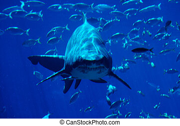 #2, tiburón, punteo