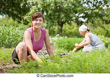 2 women, dolgozó, alatt, kert