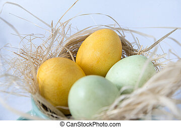 2 yellow and green eggs in nest on blue background