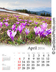 2014 Calendar. April. Blossom of crocuses in spring in the...