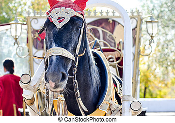2014 year of the horse, the horse of wedding