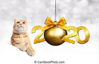 2020 happy new year number text, ginger pet cat with golden christmas ball with ribbon bow isolated on silver blurred lights background
