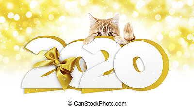 2020 happy new year number text, ginger pet cat with golden christmas ribbon bow isolated on golden blurred lights background