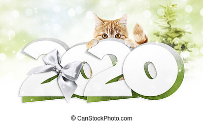 2020 happy new year number text, ginger pet cat with silver christmas ribbon bow isolated on blurred green lights background