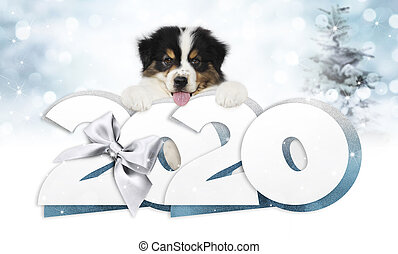 2020 happy new year number text, puppy pet dog with silver christmas ribbon bow isolated on blurred blue lights background
