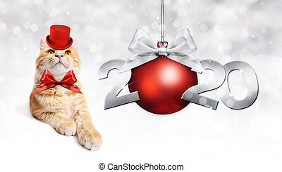2020 happy new year number text with funny magic ginger cat with red hat and christmas ball isolated on silver blurred lights background