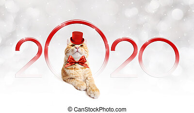 2020 happy new year number text with funny magic ginger cat with red hat and christmas ribbon bow isolated on silver blurred lights background