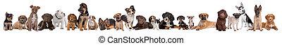 22, puppy, honden, in een rij